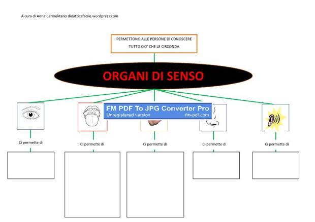 organi di senso-p1